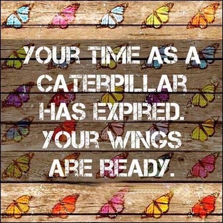 caterpillar wings